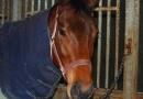 gallery-horse-racing-01