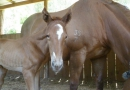 gallery-horse-racing-12