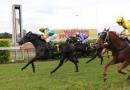 gallery-horse-racing-14