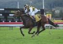 gallery-horse-racing-16