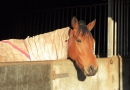 gallery-horse-racing-17