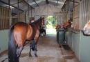 gallery-horse-racing-18