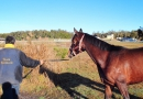 gallery-horse-racing-19