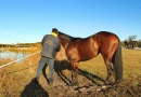 gallery-horse-racing-20