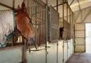 gallery-horse-racing-21