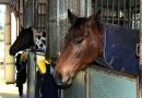 gallery-horse-racing-22
