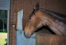 gallery-horse-racing-23