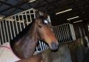gallery-horse-racing-24
