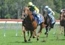gallery-horse-racing-28