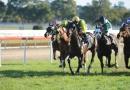 gallery-horse-racing-30