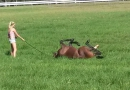 Oscar  having an afternoon roll at our picturesque Tuncurry racing  facility