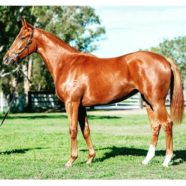A Yearling filly joining the stable by Dream Ahead